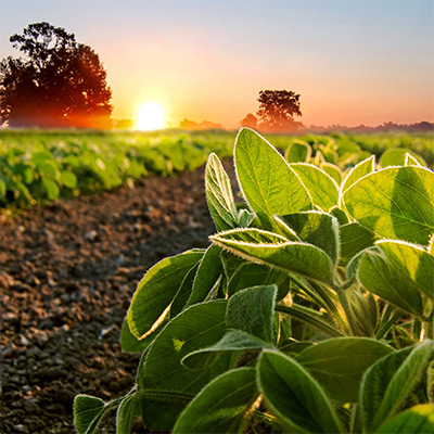 Agriculture Industry Image